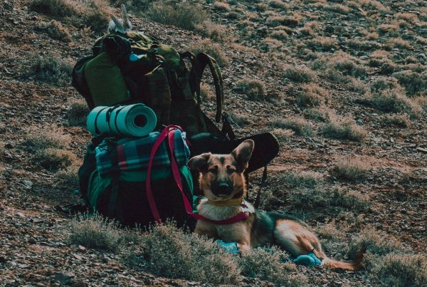Backpacking food for dogs